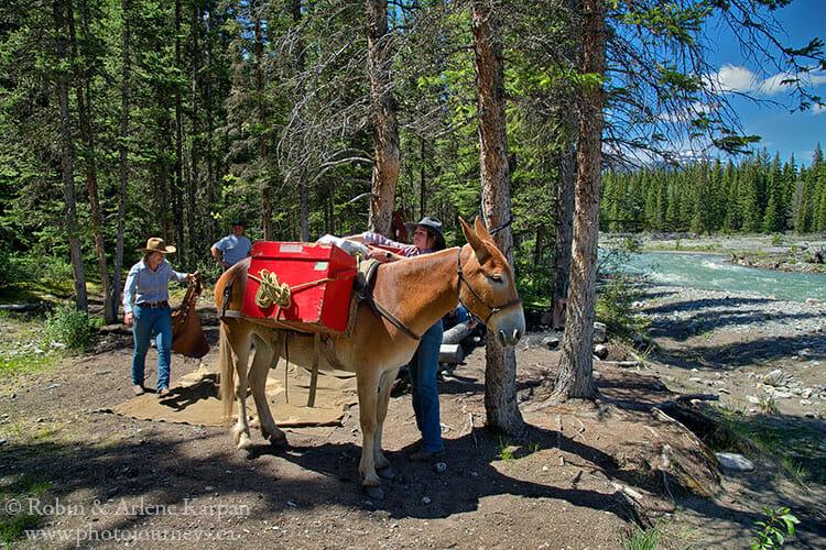 Mule, Banff backcountry horseback adventure