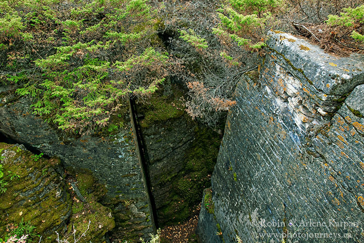 Limestone crevices
