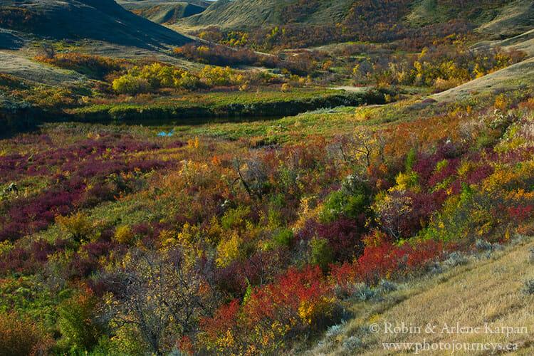 Fall colours, Saskatchewan Landing Provincial Park