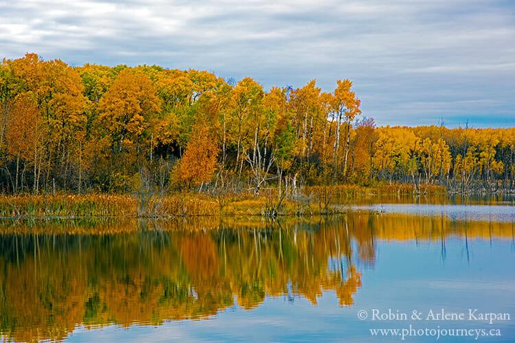 Fall colours, Thickwood Hills, Saskatchewan